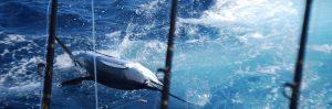 Sport Fishing Charters in Osa Peninsula