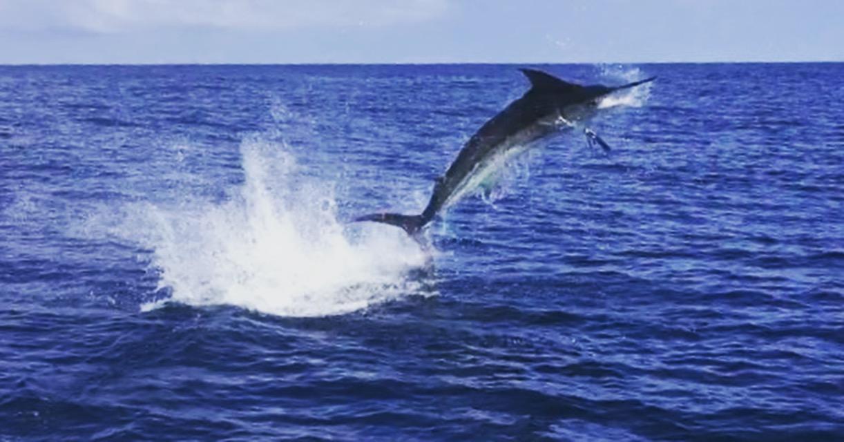 Fishing reports fish drake bay for Costa rica fishing report